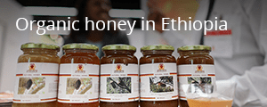 Organic honey in Ethiopia