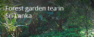 Read more about our story on Forest garden tea in Sri Lanka