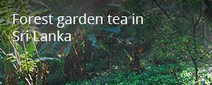 ProFound story - forest garden tea in Sri Lanka