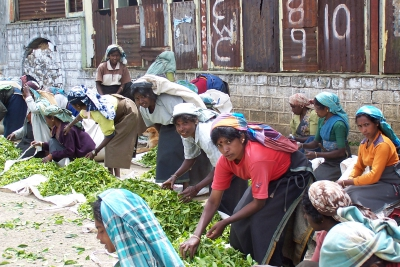 Sustainable tea production in Sri Lanka