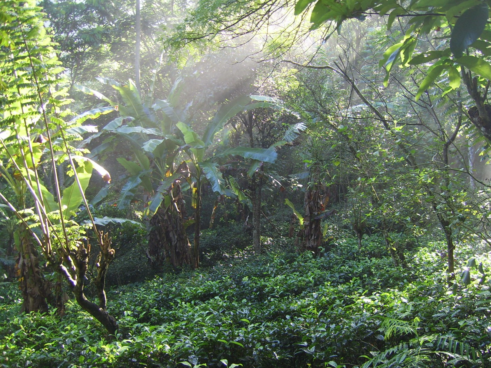 ProFound works towards protecting biodiversity and natural resources