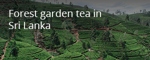 ProFound story - forest garden tea in Sri Lanka