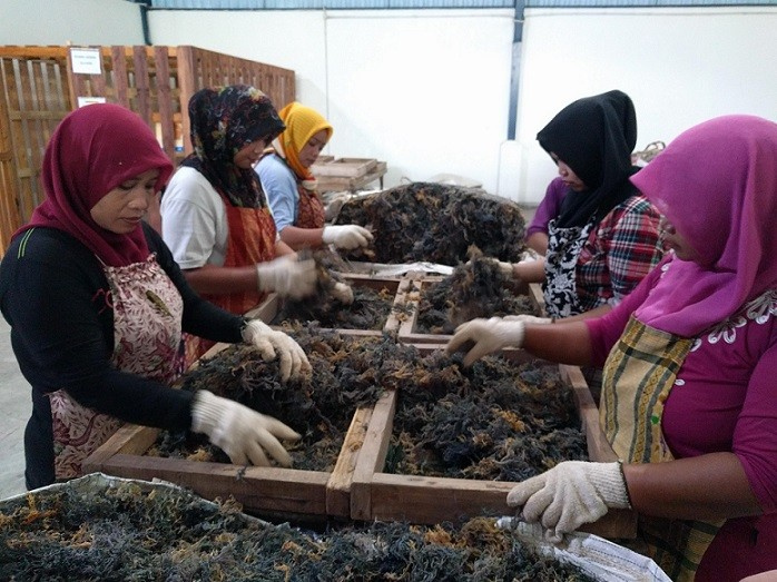 Visiting seaweed company as part of the new export development project in Indonesia