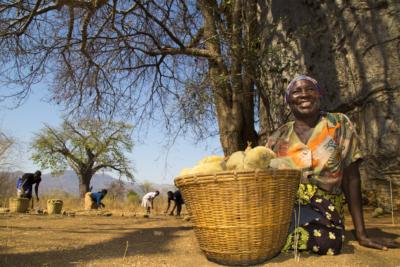 Baobab at Organic Africa Pavilion 2020