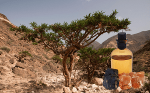 Organic and fair trade Frankincense - Gums and Resins