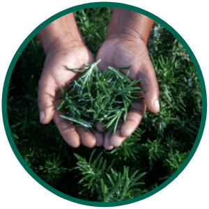 Enhancing Sustainable Sourcing